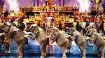 Spettacolo Phuket Fantasea - Show serale a tema