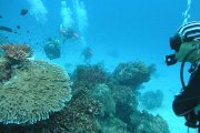 Immersioni alle Isole Similan, Thailandia