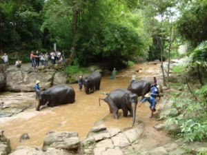 Thailand Destinations - Chiang Mai Elephant Camp