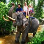 Elephant Trekking Activities in Thailand