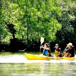 Krabi Kayaking Tours - Krabi Activities
