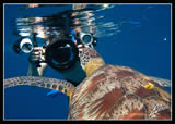 Underwater Photo course with Adriano Trapani