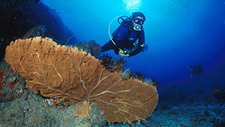Phuket Activities - Scuba Diving