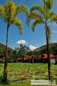 Kapong Resort