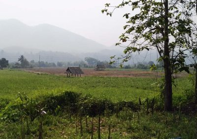 Chiang Mai - Mae Hong Son - ricefield and mountains
