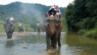 Elephant Trekking Bathing Khao Lak