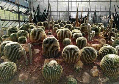 chiang mai, queen sirikit botanic garden - cactus house