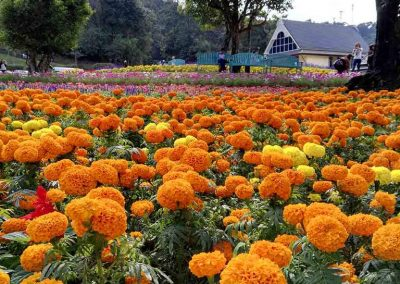 chiang mai, queen sirikit botanic garden - orange flowers