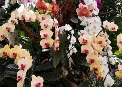 chiang mai, queen sirikit botanic garden - orchids