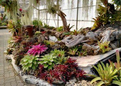 chiang mai, queen sirikit botanic garden - plants