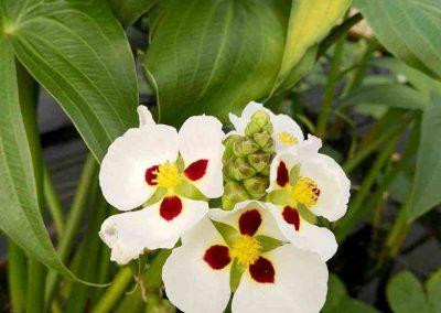 chiang mai, queen sirikit botanic garden - white flowers