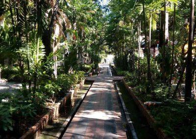 chiang mai, wat phra singh -garden walkway