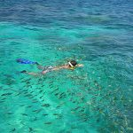Snorkeling with Fish at Phi Phi Islands