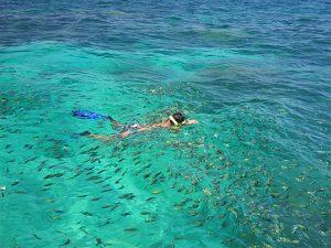 Snorkeling Thailand - Koh Lanta Phi Phi Tour Snorkeling Fish