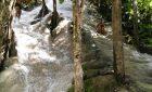 Bua Tong Waterfalls – Chiang Mai