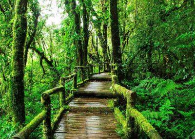 Doi Inthanon Summit and Ang Ka Luang Nature Trail
