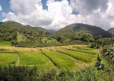 Doi Wiang Pha Village