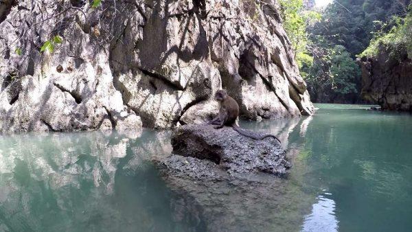 Phang Nga Bay Sea Canoe - Monkey