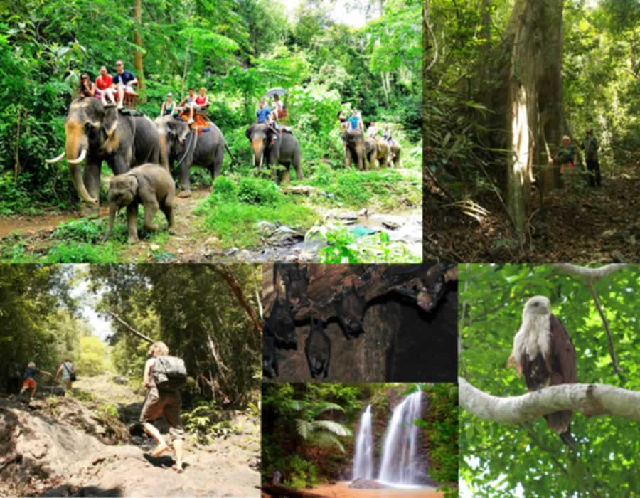Lanta Elephants & Jungle Hike